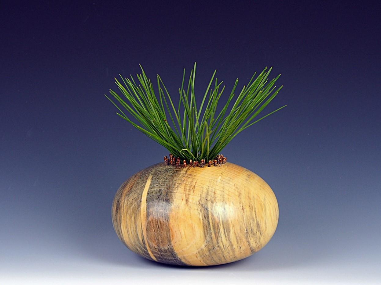 Ponderosa Pine Hollow Form