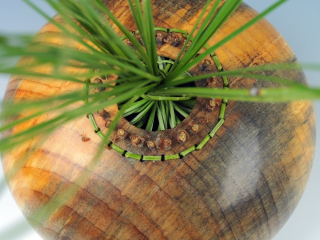 Woven: Ponderosa Pine Hollow Form